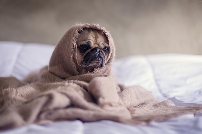 pojištění psů